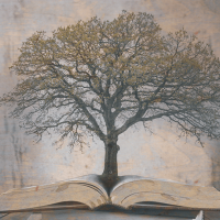Genealogy 101: Start Tracing Your Family Tree